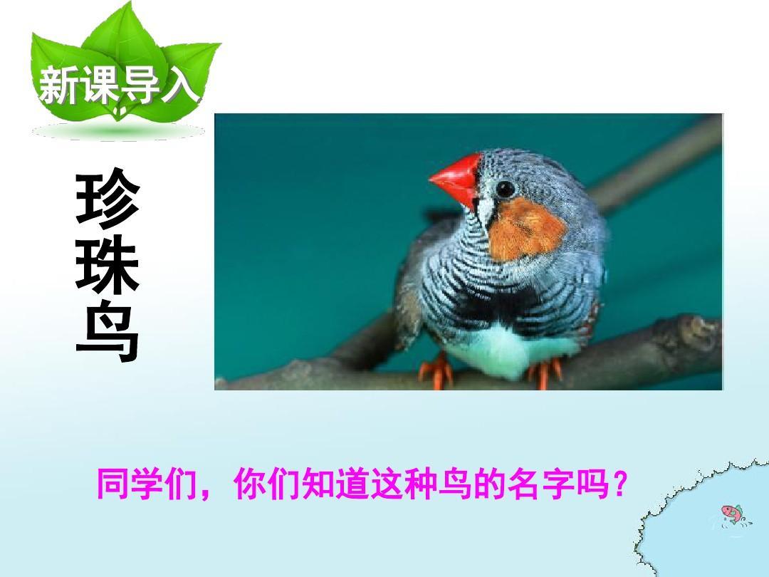 下册S版语文五语文小学年级第7课珍珠鸟PPT课件坐井观天教学设计表图片