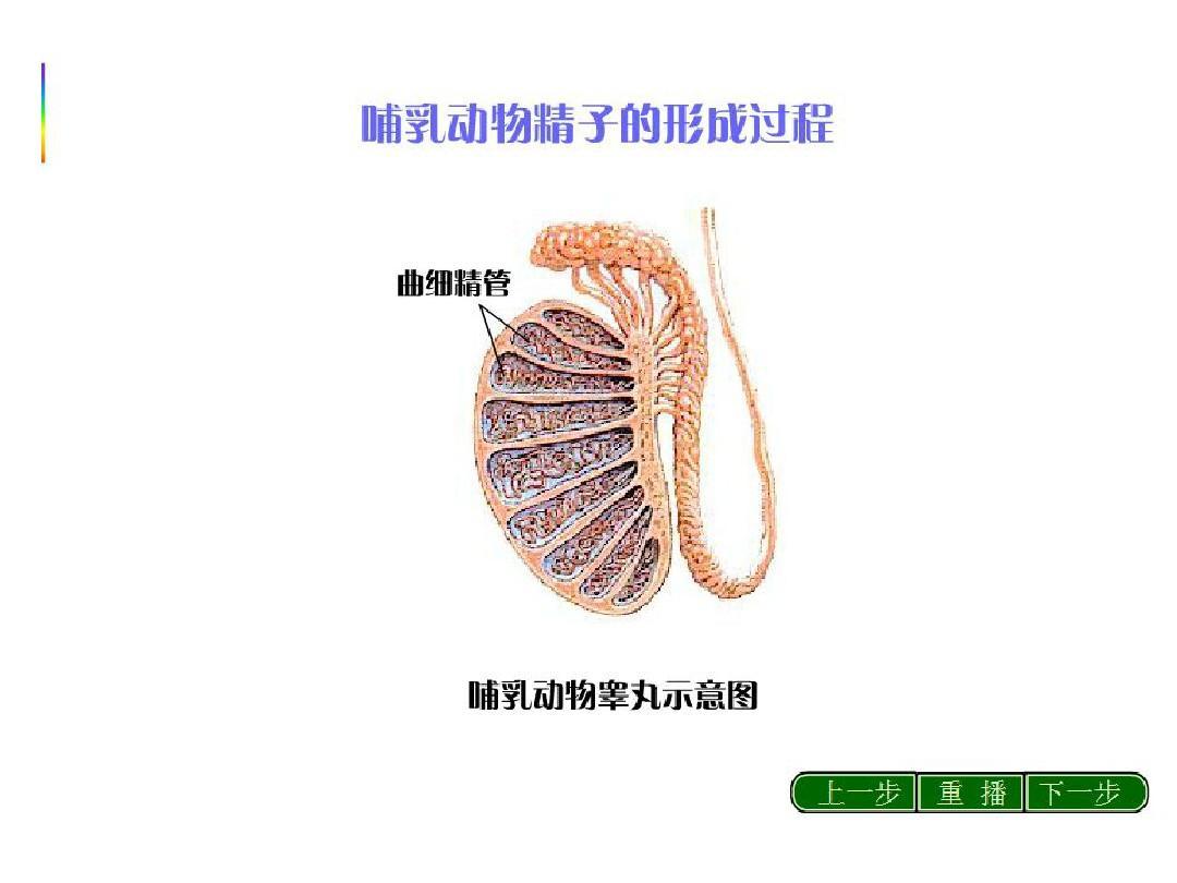复习课件一轮高考生物:细胞形成和有性生殖减数的分裂西湖名堤课件12图片