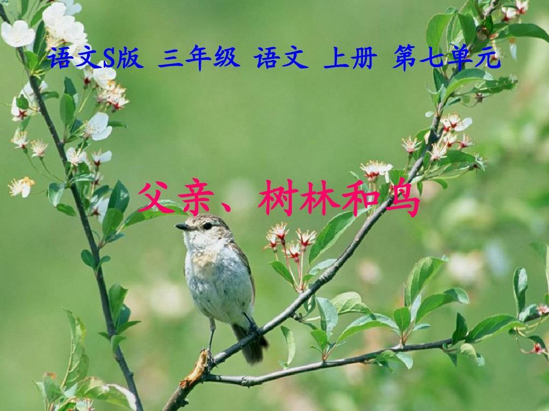 《父亲、树林和鸟》课件(语文S版三年级语文上册课件)
