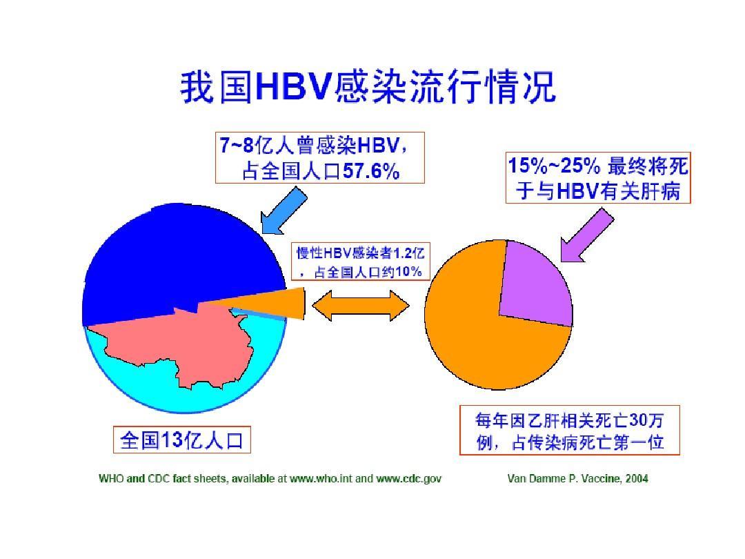 慢性乙型病毒性肝炎_乙型肝炎病毒_word文档在线阅读与下载_免费文档