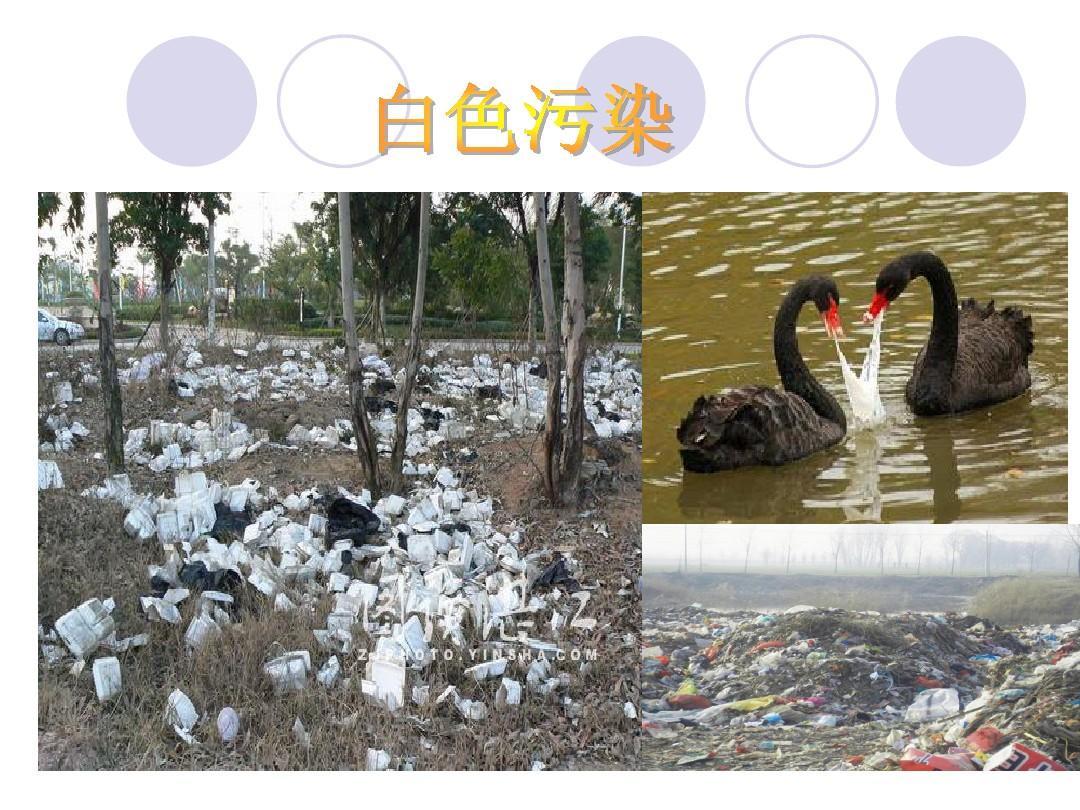 白色污染与环境保护ppt图片