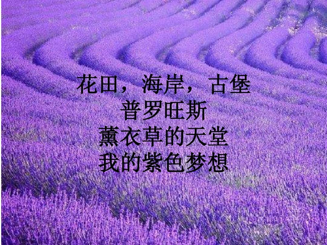 花田,海岸,古堡 普罗旺斯 薰衣草的天堂 我的紫色梦想