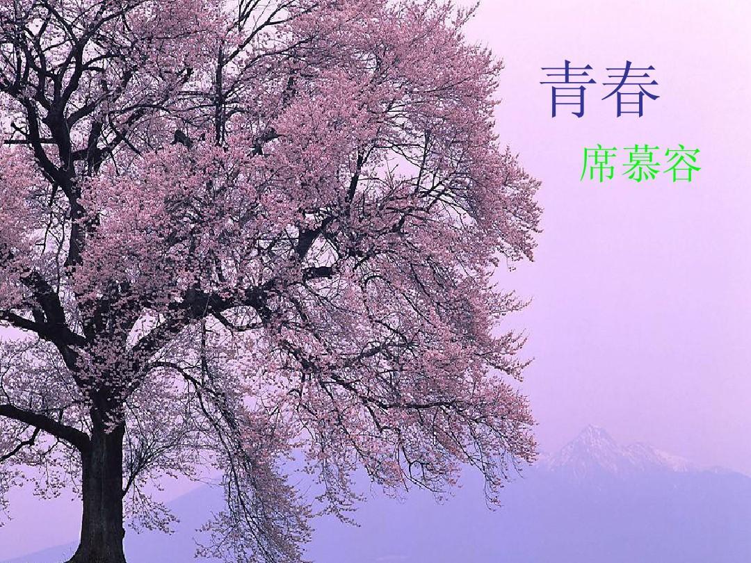 青春席慕容_青春-席慕容ppt