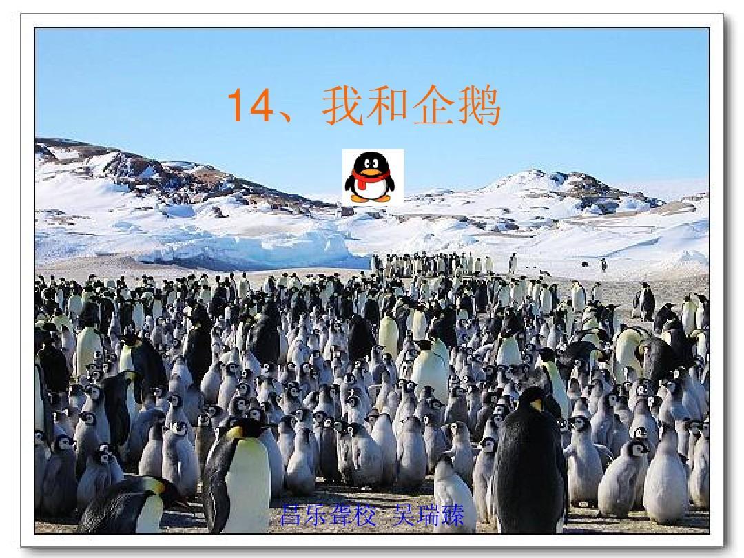 14、我和企鹅 教学课件
