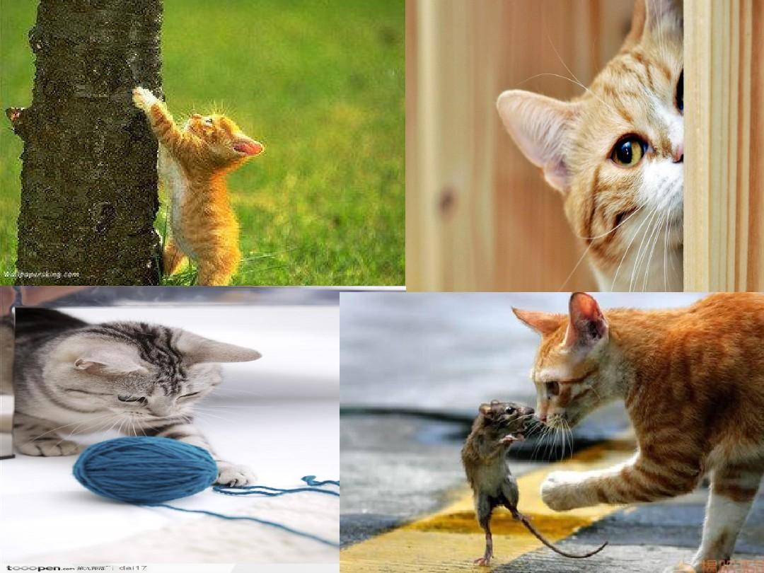 郑振铎 猫ppt