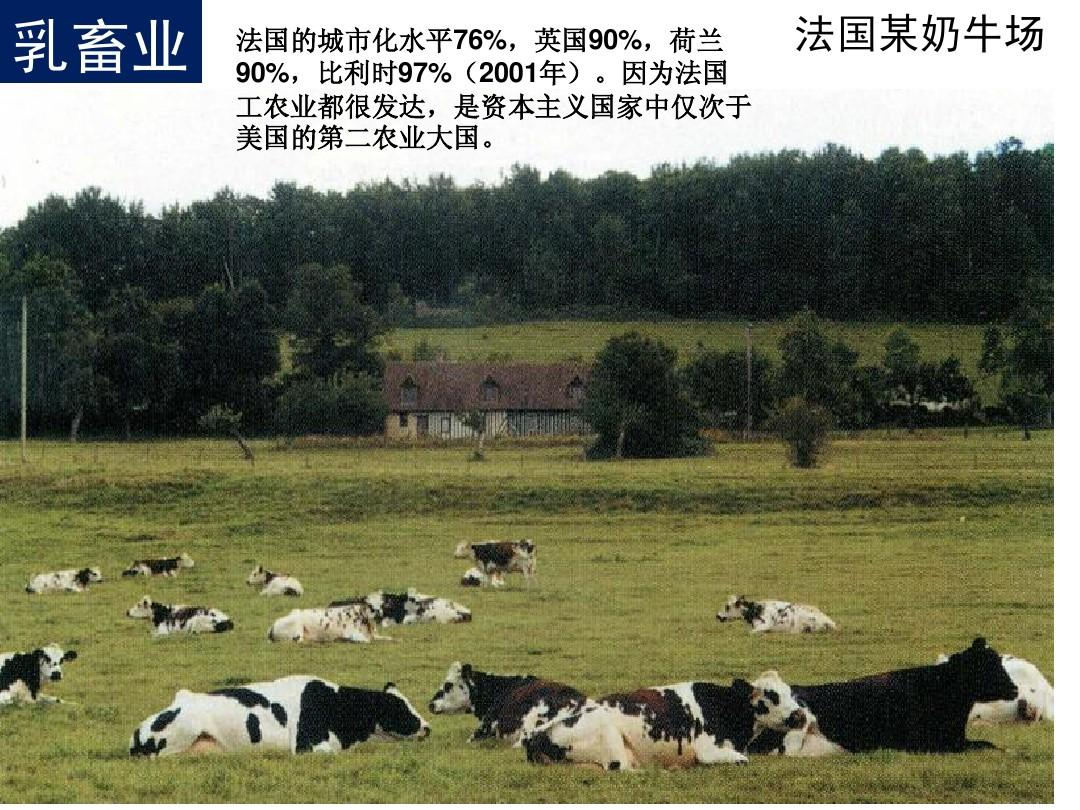 大牧场放牧业和乳畜业