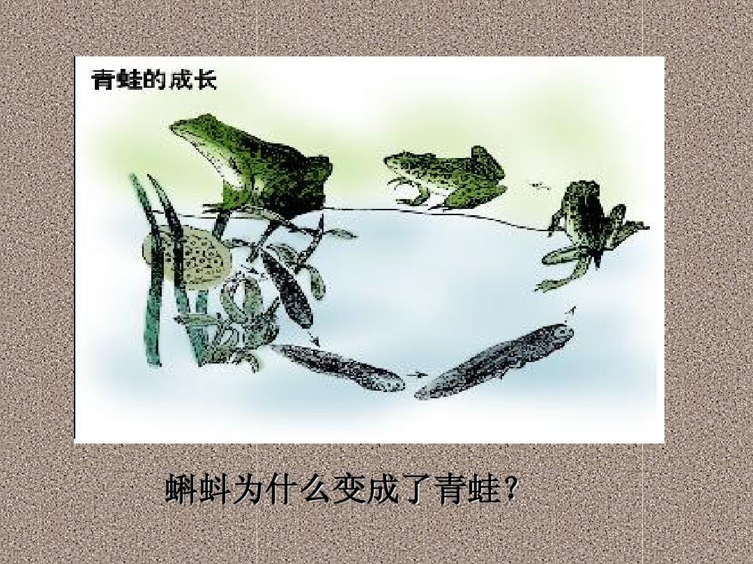 蝌蚪为什么变成了青蛙?图片