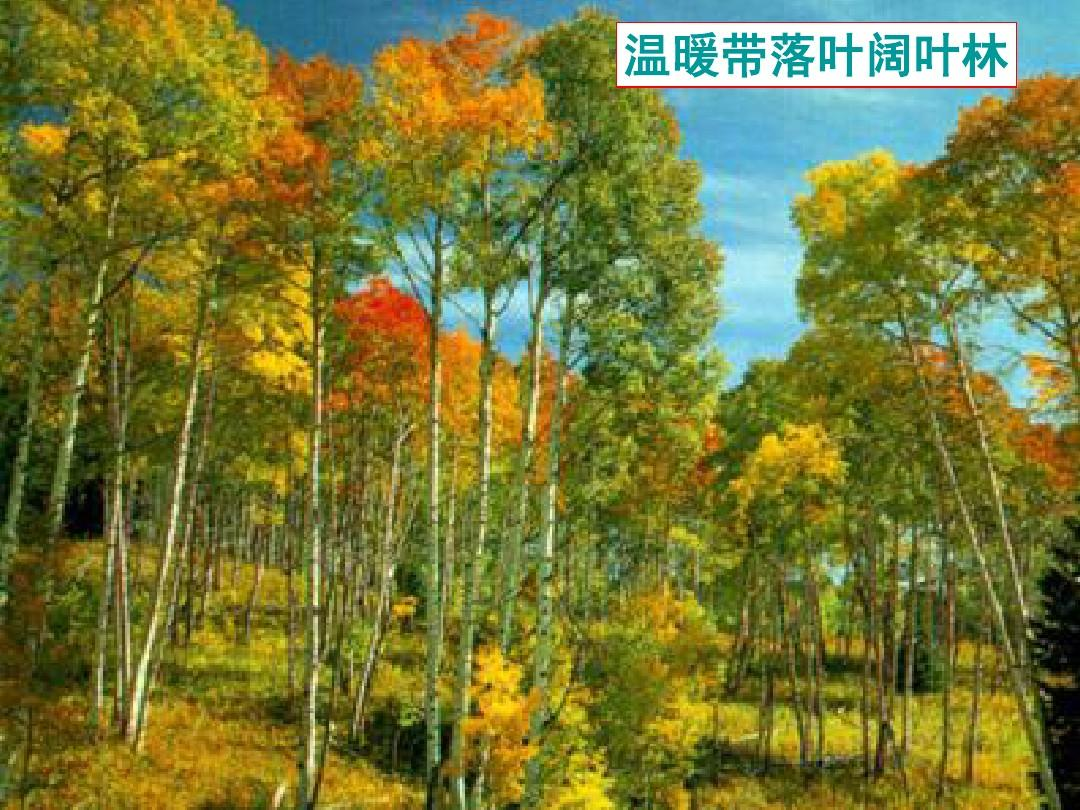 温暖带落叶阔叶林图片