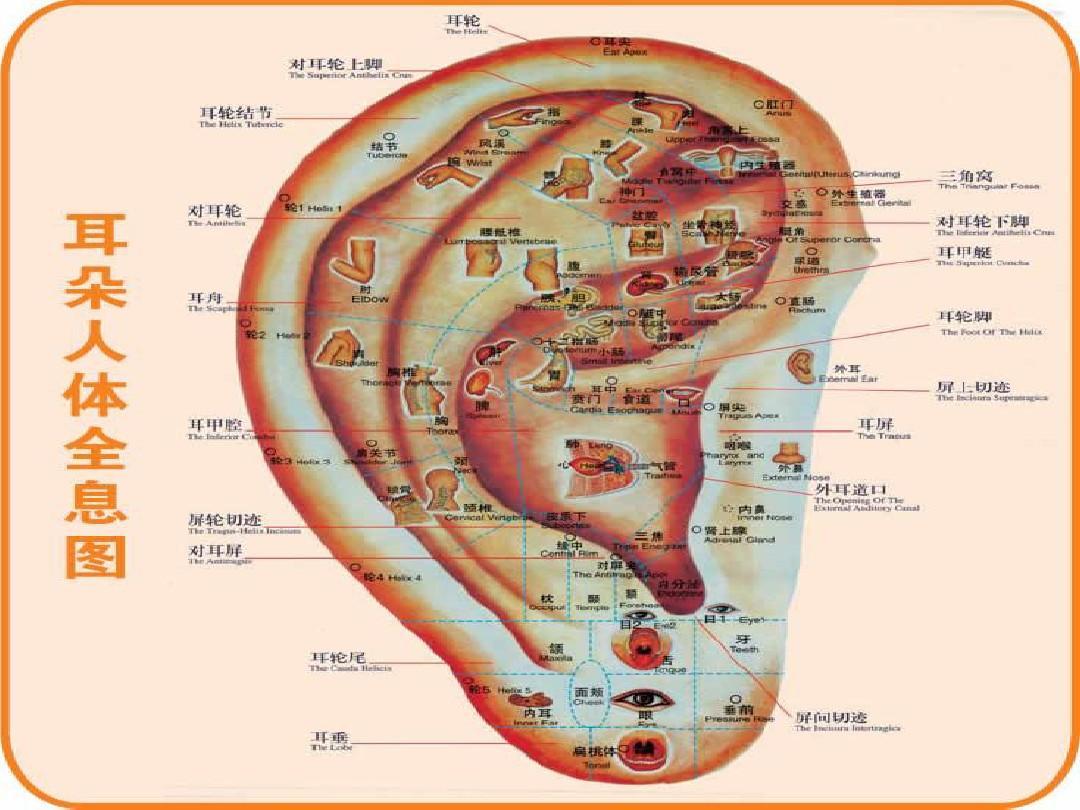 中医针灸经络视频_针灸人体穴位图大全1_word文档在线阅读与下载_无忧文档