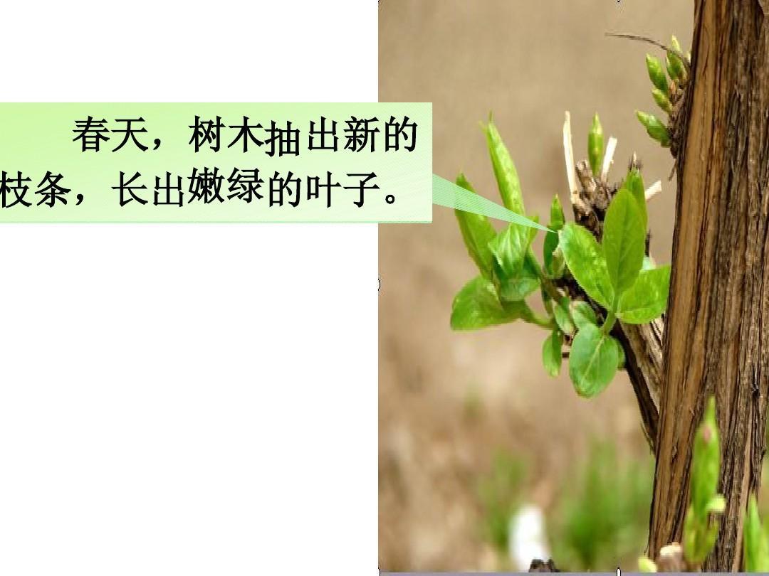 春天,树木抽 出新的 枝条,长出嫩绿的叶子.