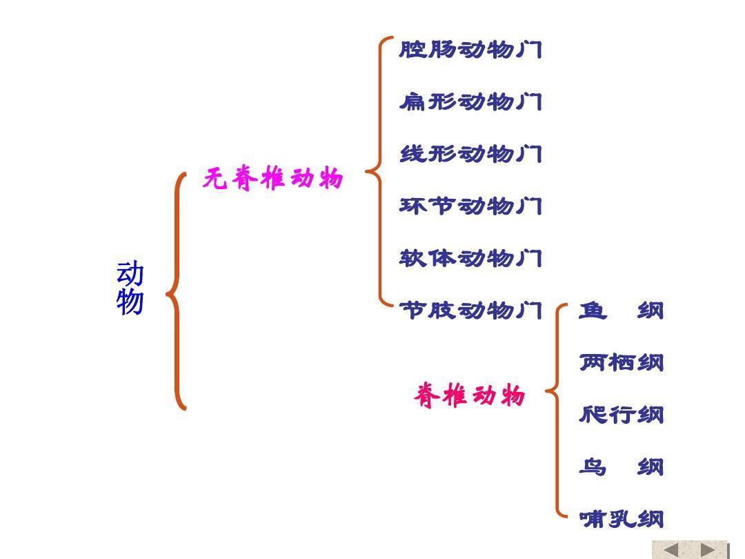 人教八上物种 第五单元 第一章 第一节-腔肠动物和条形动物 教案