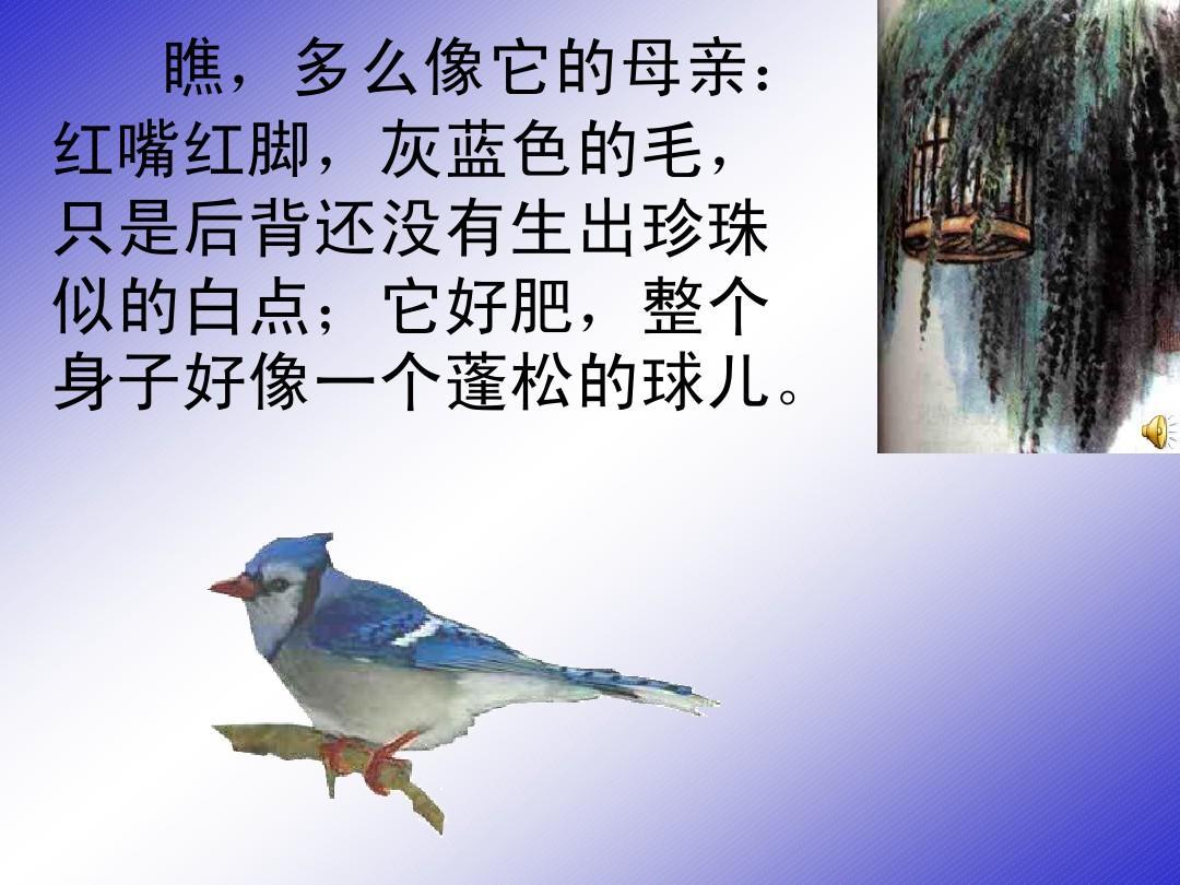 (苏教版)四上册语文课件课件_21.珍珠鸟ppt年级契税ppt2017图片