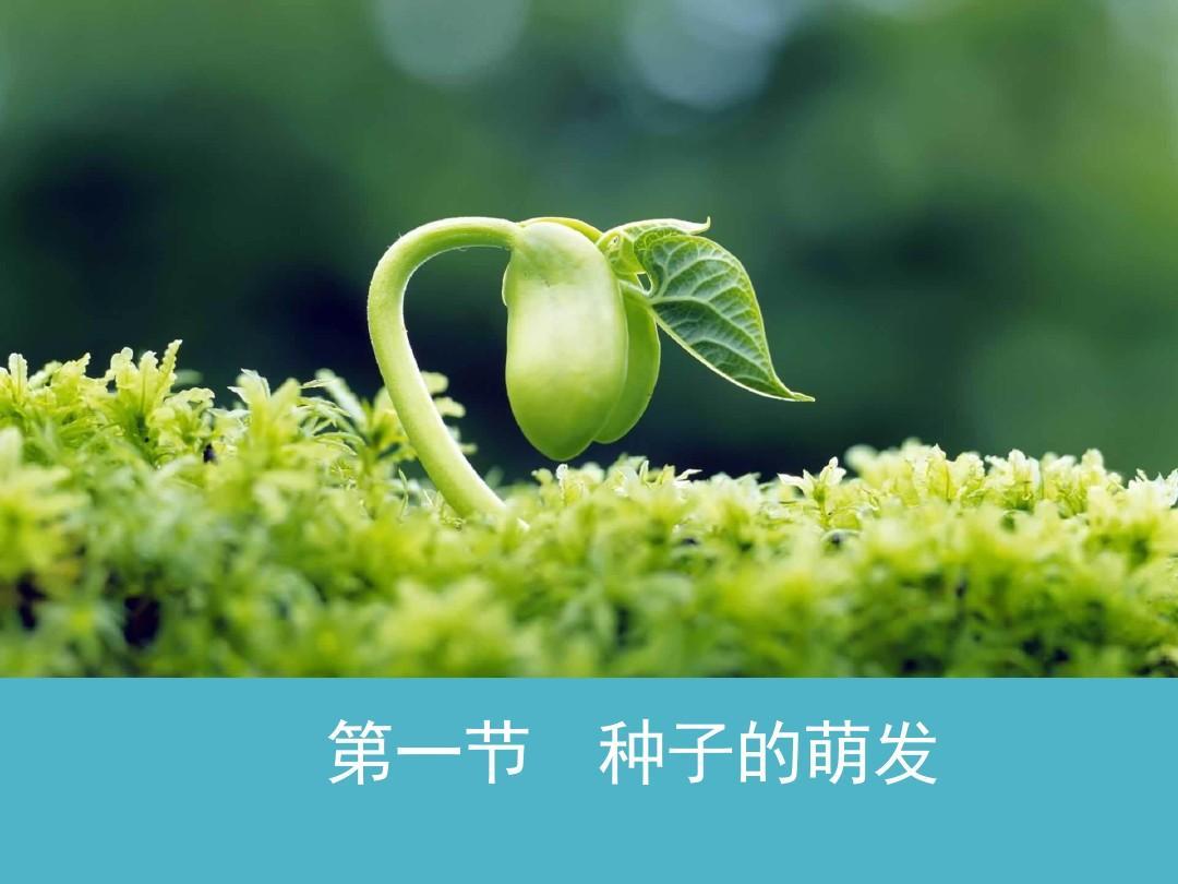 【新版】部编人教版七年级生物上册《种子的萌发》名师课件 新版ppt