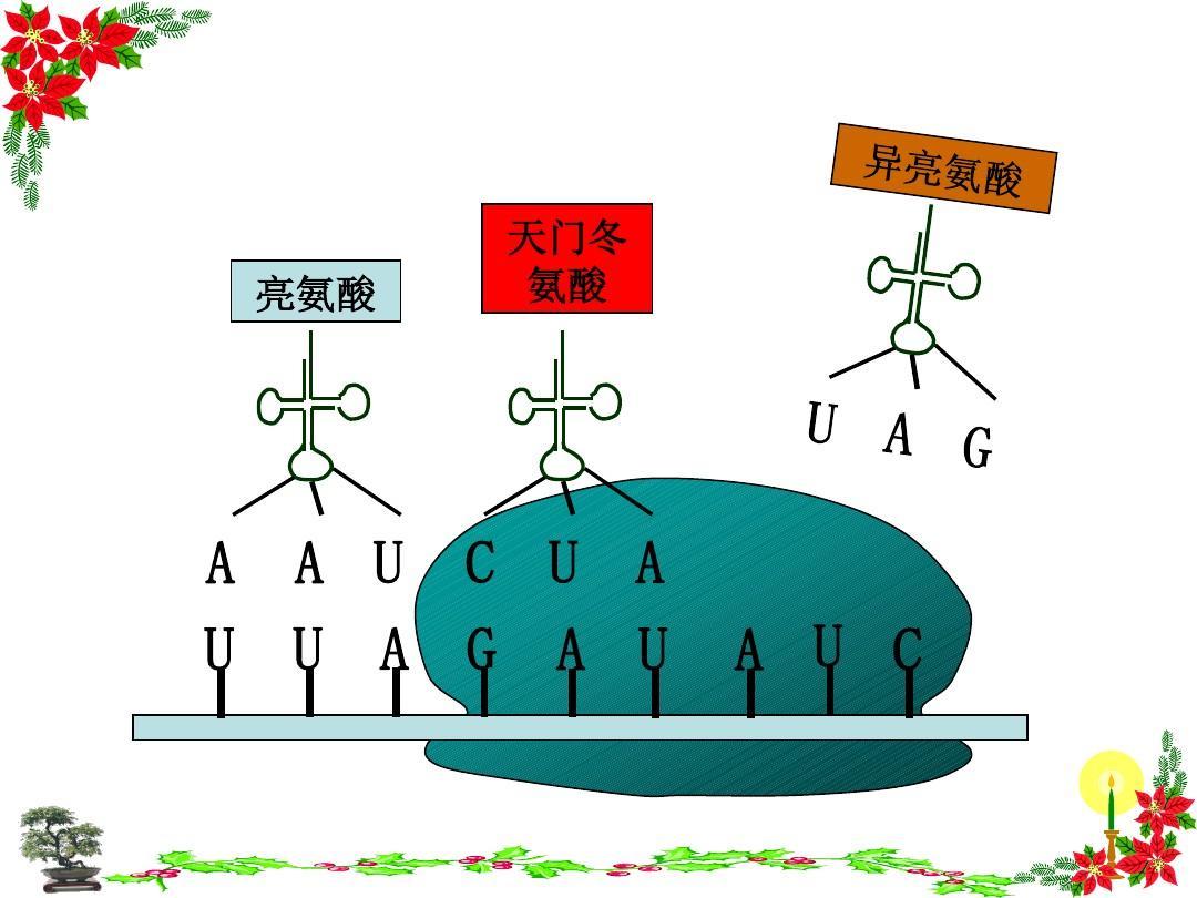蛋白质转录翻译过程图片