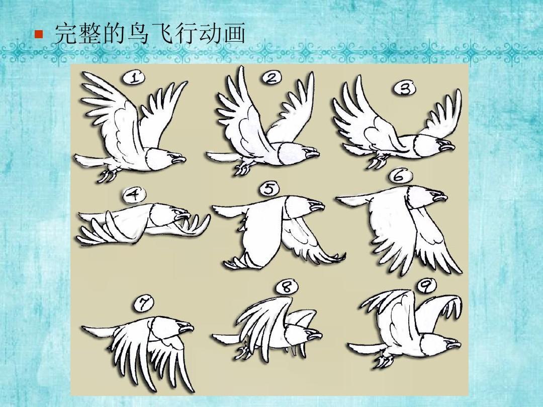 原画设计——动画运动规律_动物运动ppt图片