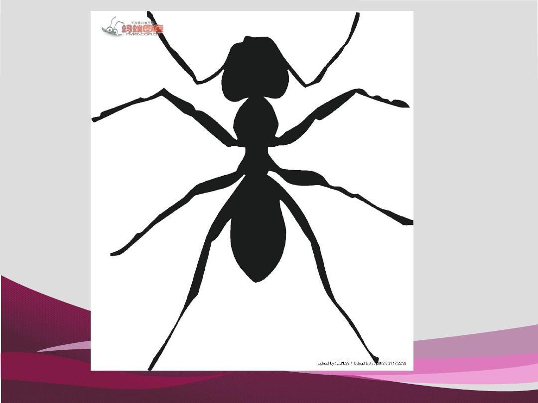 创意美术课程蚂蚁和西瓜ppt图片