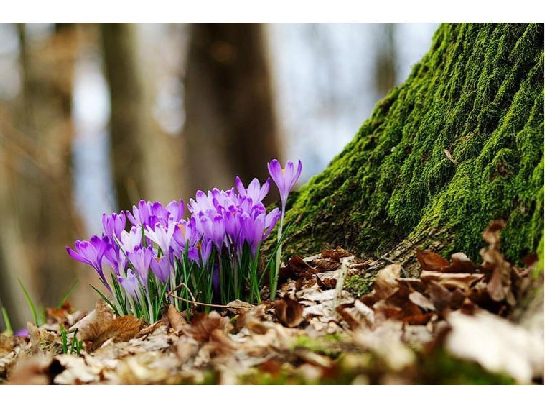 让你无法忘怀的美丽风景_图片_花鸟草木_大自然_山水