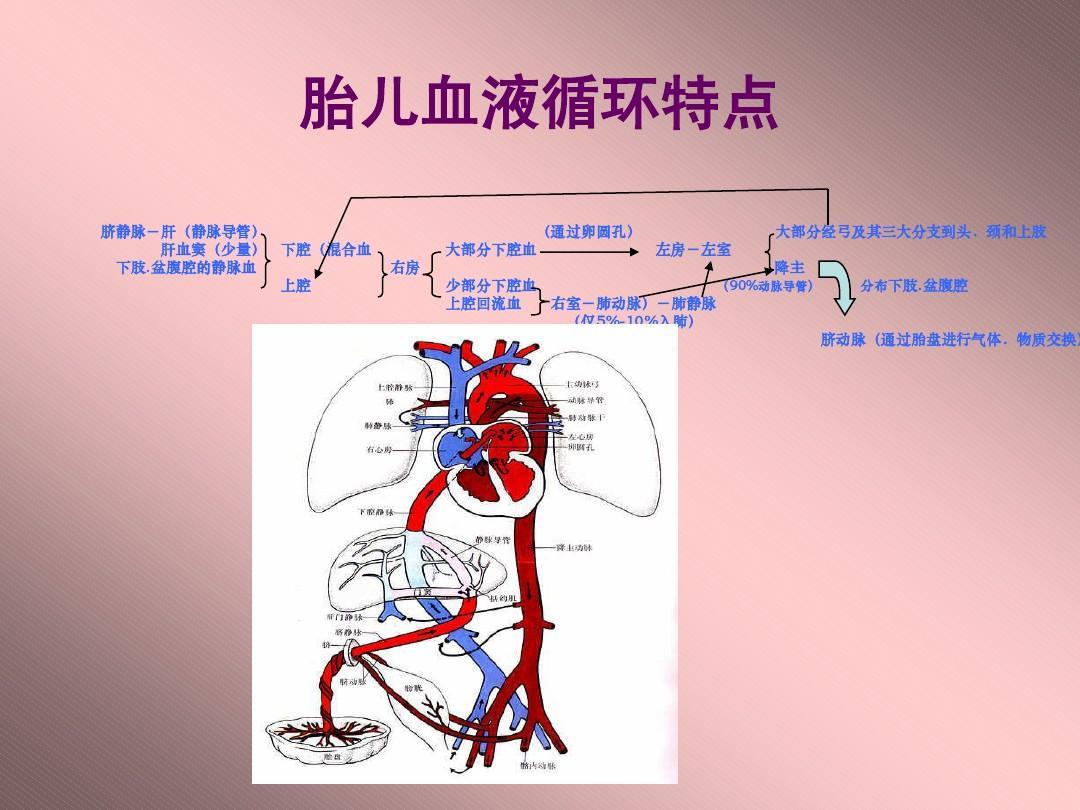 胎儿超声心动图.ppt图片