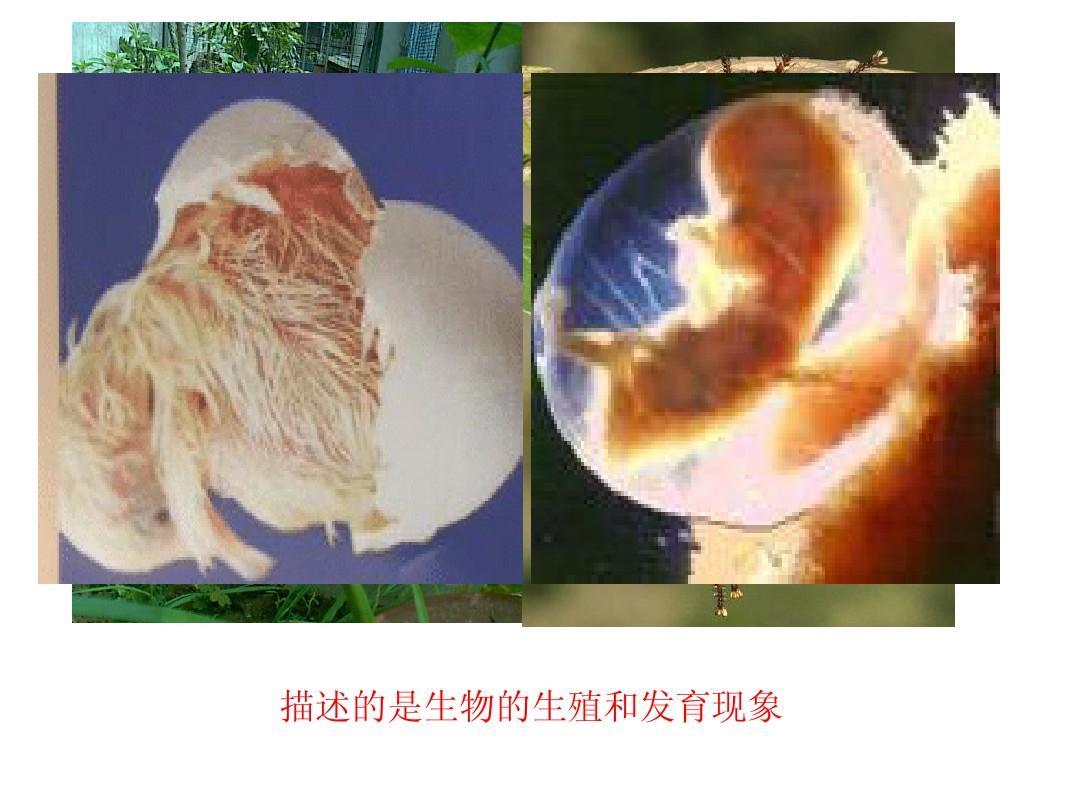 八年级生物上册 第19章第1节 人的生殖和发育课件 北师大版