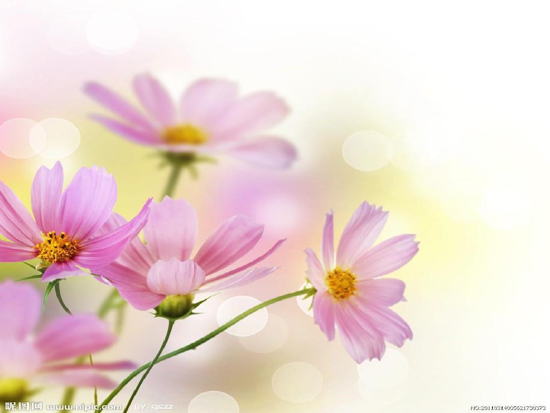 自然 清新 淡雅 温馨 可爱 ppt整套模板图片