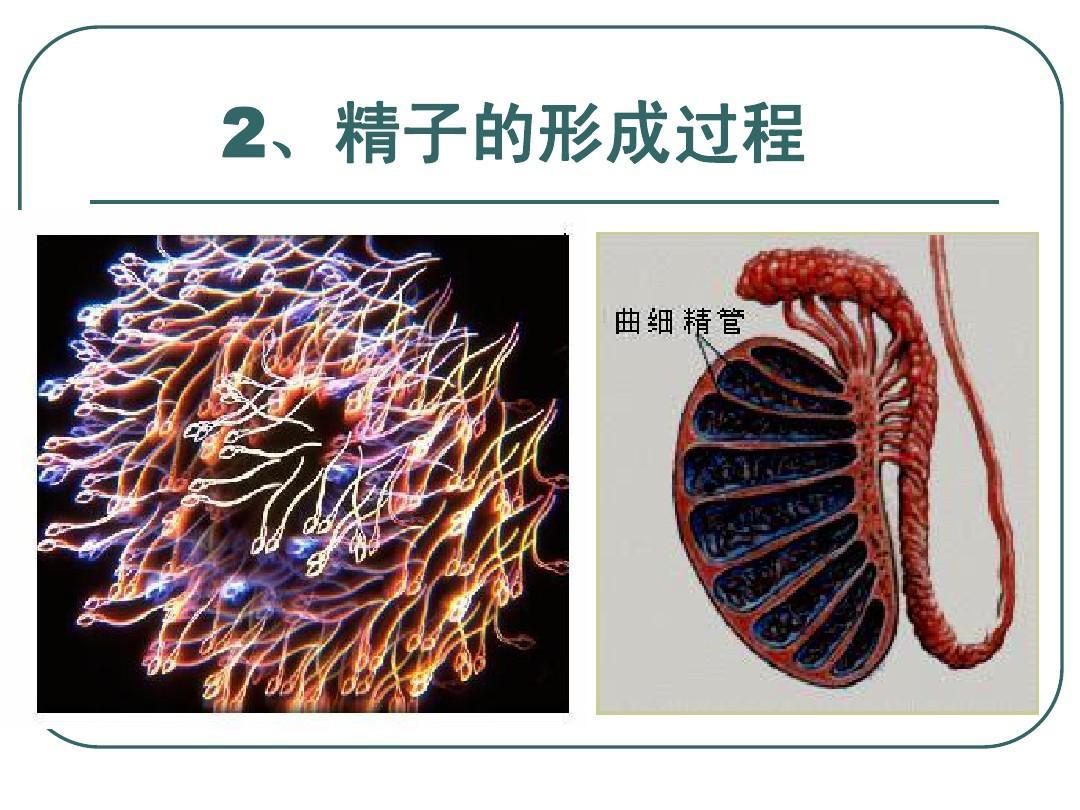 《减数分裂,v减数句子有性生殖》作用ppt教学设计把课课件具体微写图片