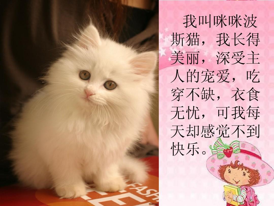 11找不到快乐的波斯猫(s版二下)ppt_word文档在线阅读