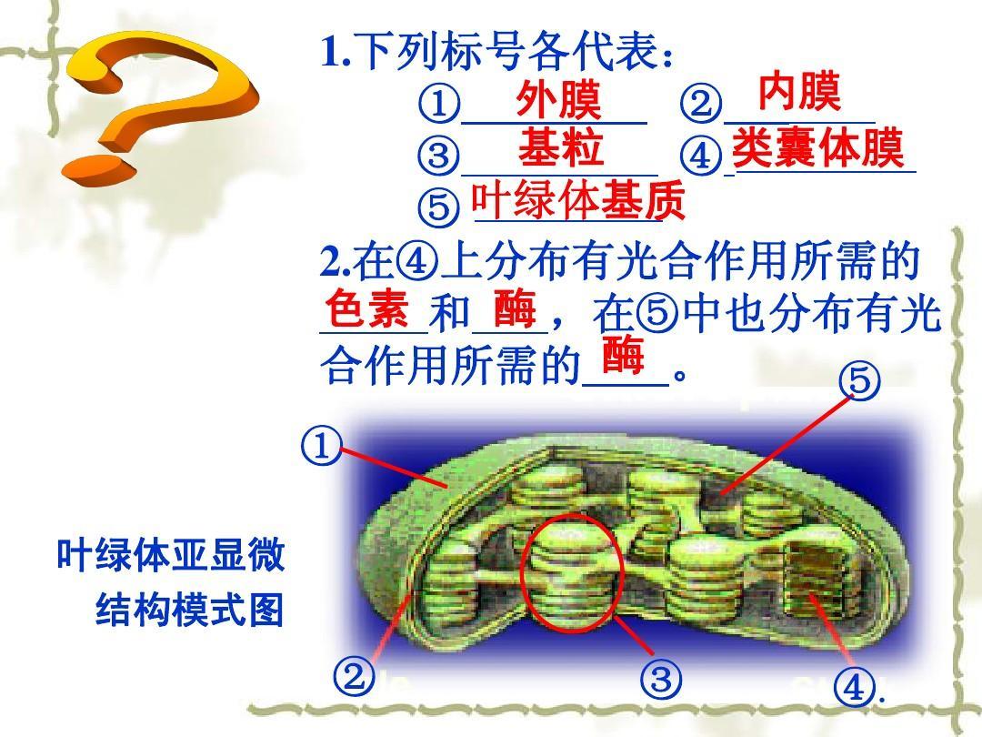 高中课件:5.4_量之源-光与光合作用_新人(生物教版v高中1)pptfifaonline3高中锋图片