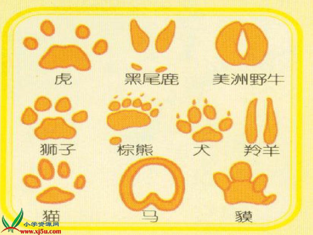 所有分类 小学教育 其它课程 《奇妙的脚印》课件(人教新课标二年级图片