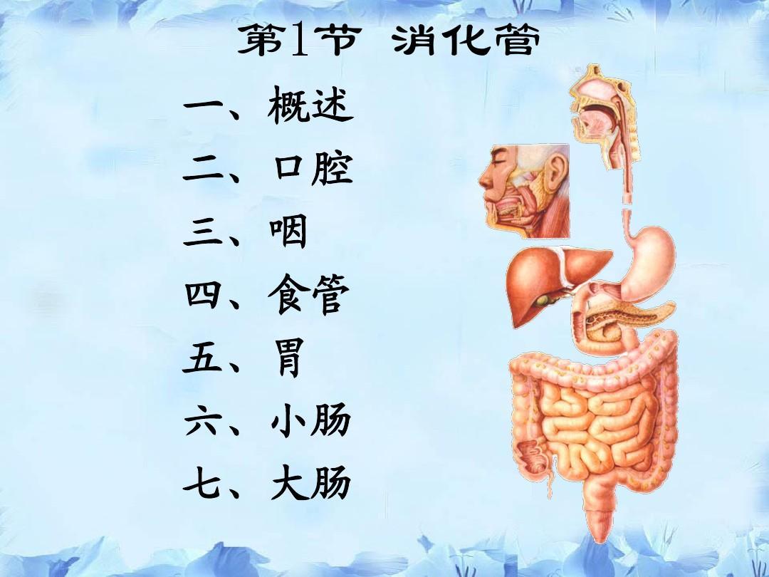 人体解剖学与组织胚胎学-消化系统-河套学院-王强ppt图片