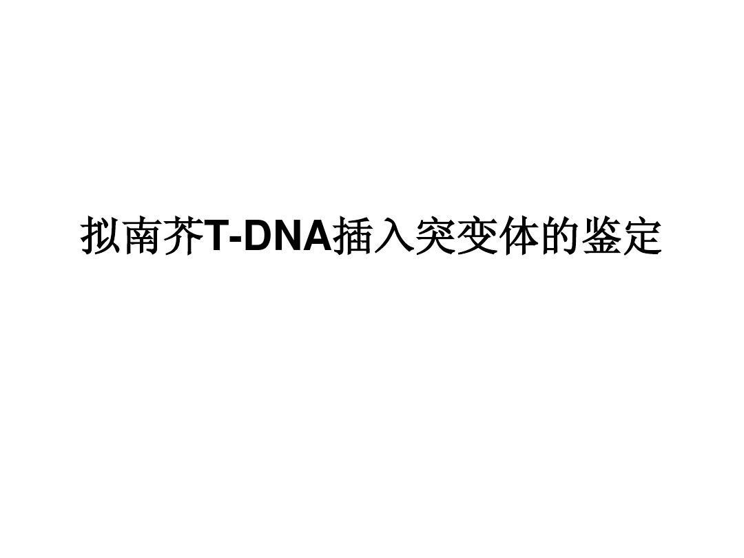 拟南芥T-DNA插入突变纯合体的鉴定PPT