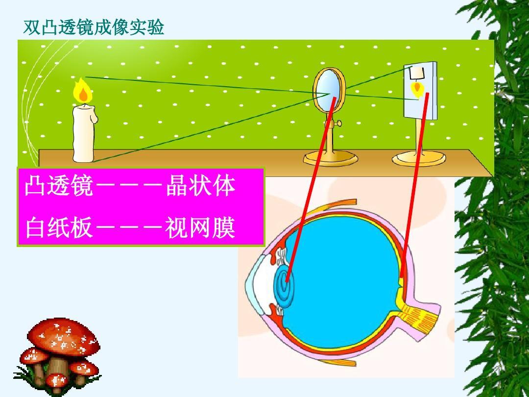 【视觉2王凡恒6.1课件对人体外界的感知眼和环境课件2ppthdlv视觉图片