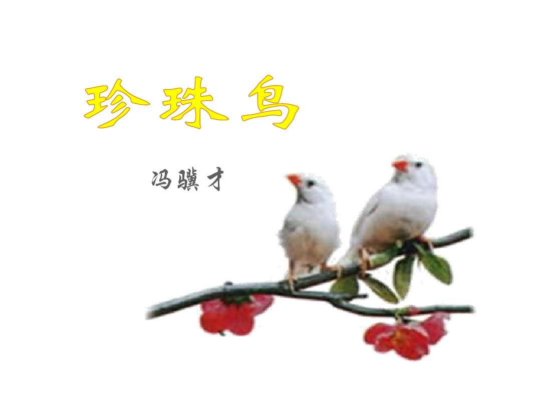 最新2017秋冀教版初中语文五语文上《珍珠鸟年级备课网络小学图片