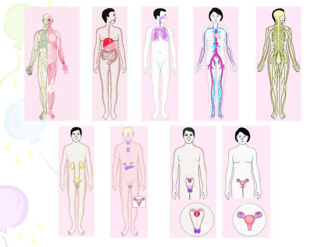 人体系统_人体八大系统ppt