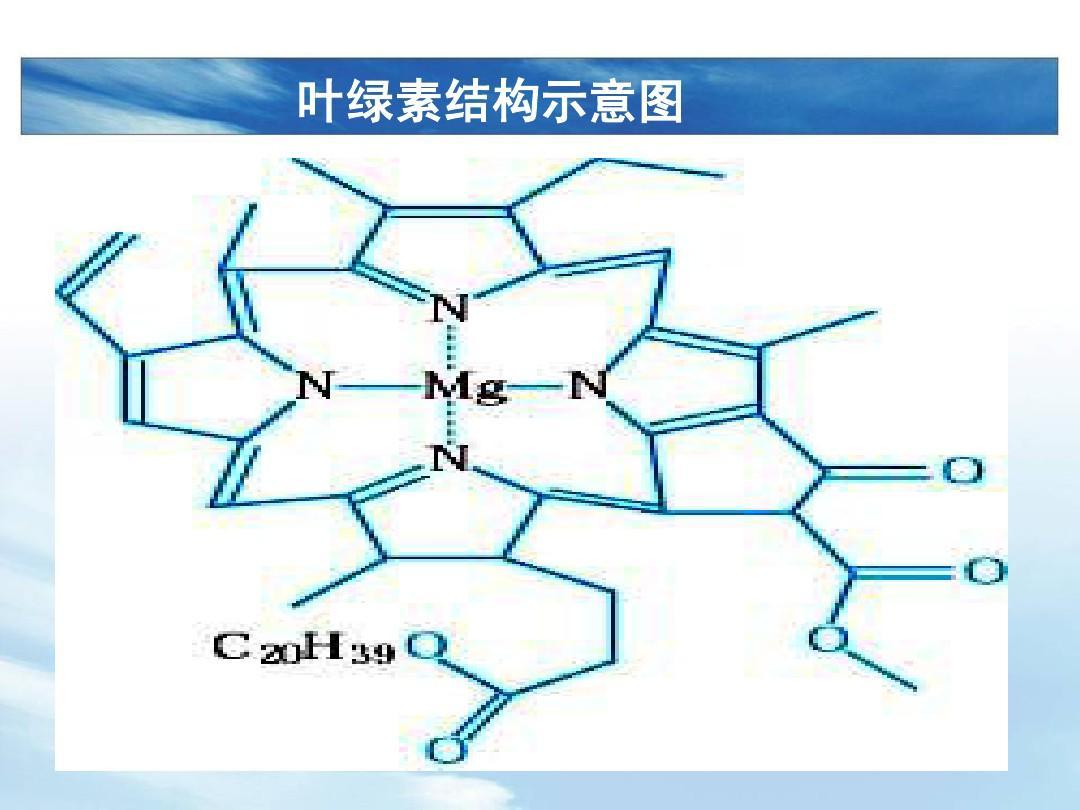 叶绿素结构示意图图片