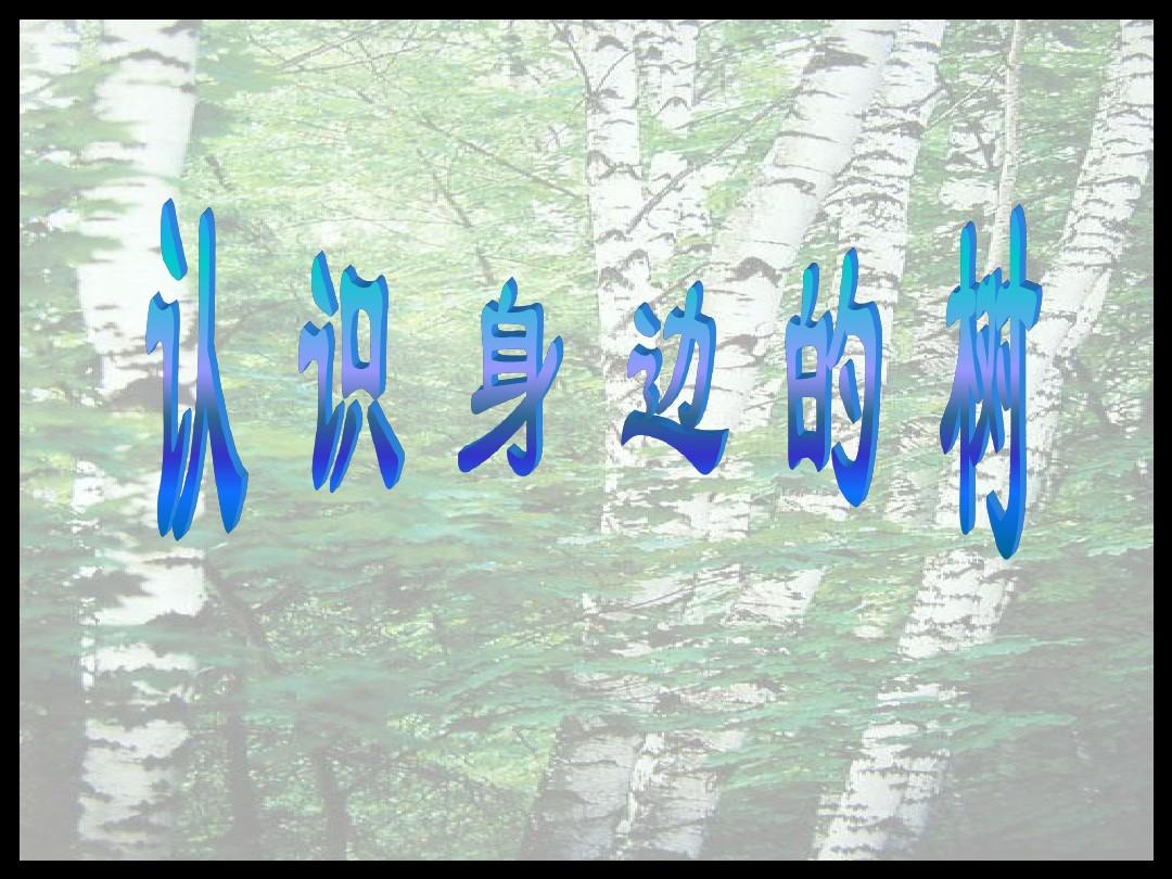 《认识身边的树》教学课件ppt图片