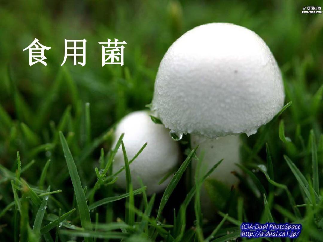 4美丽的毒蘑菇