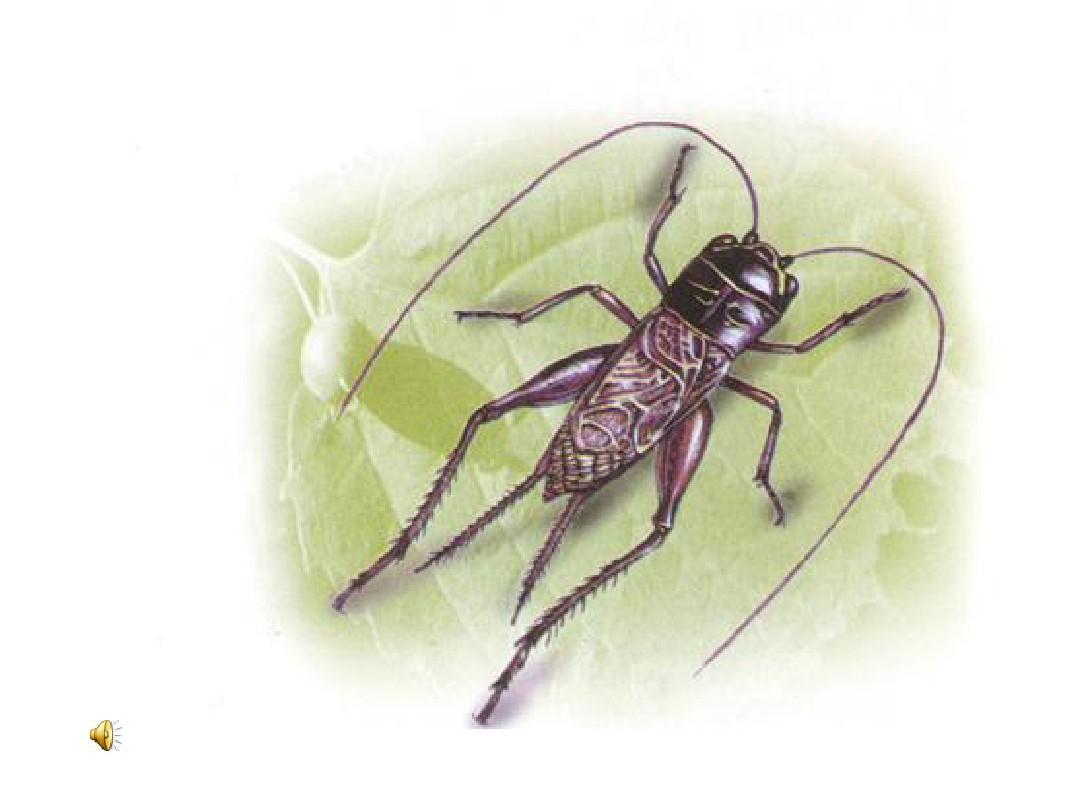 7蟋蟀的住宅(1)ppt