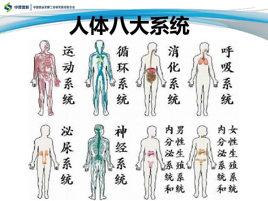 人体系统_认识人体八大系统ppt