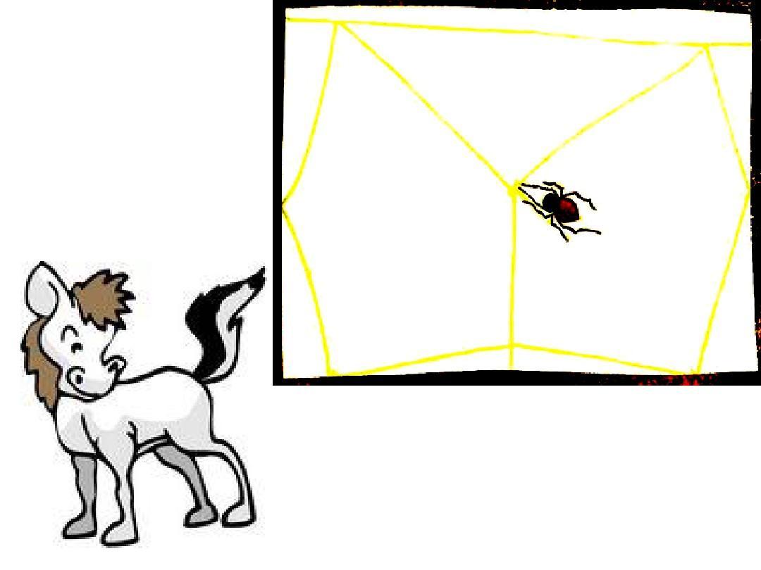 绘本《好忙的蜘蛛》ppt图片