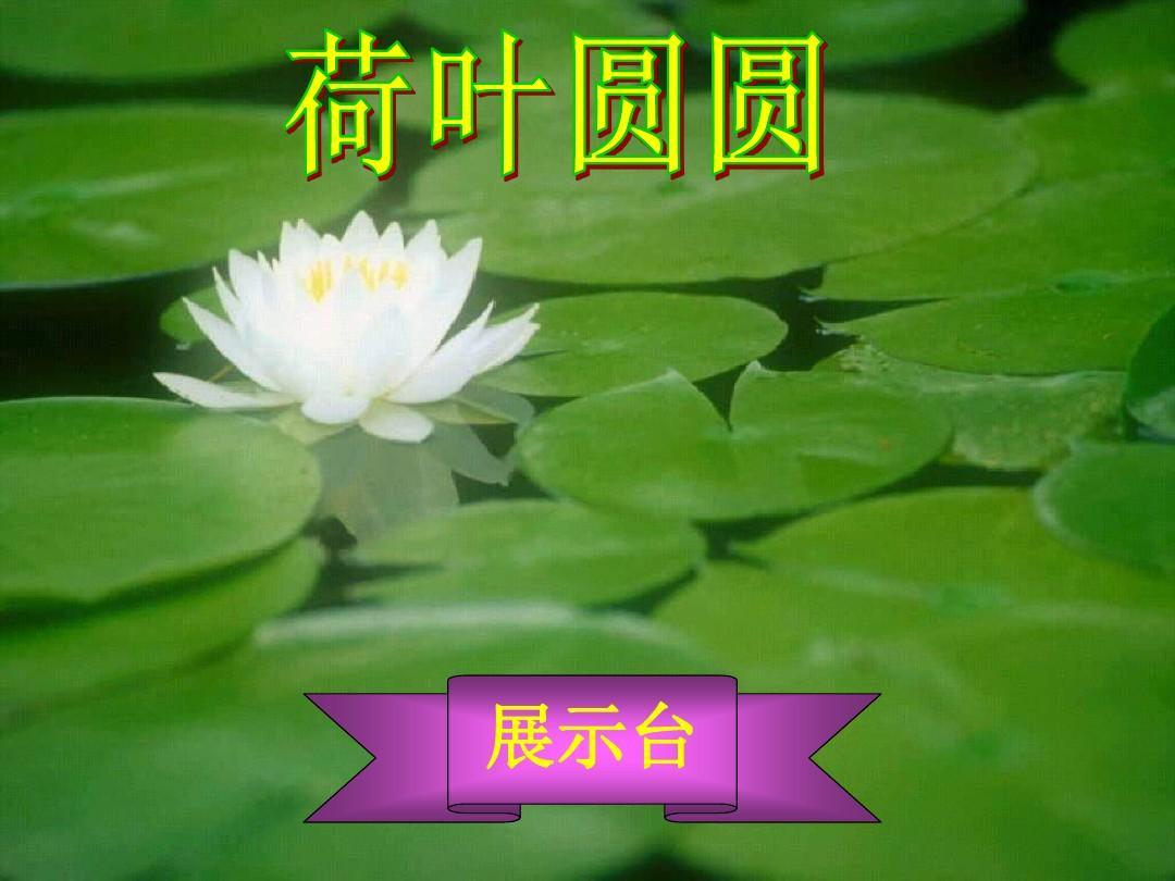 14一年级语文下册_荷叶圆圆_ppt课件_(11)14图片
