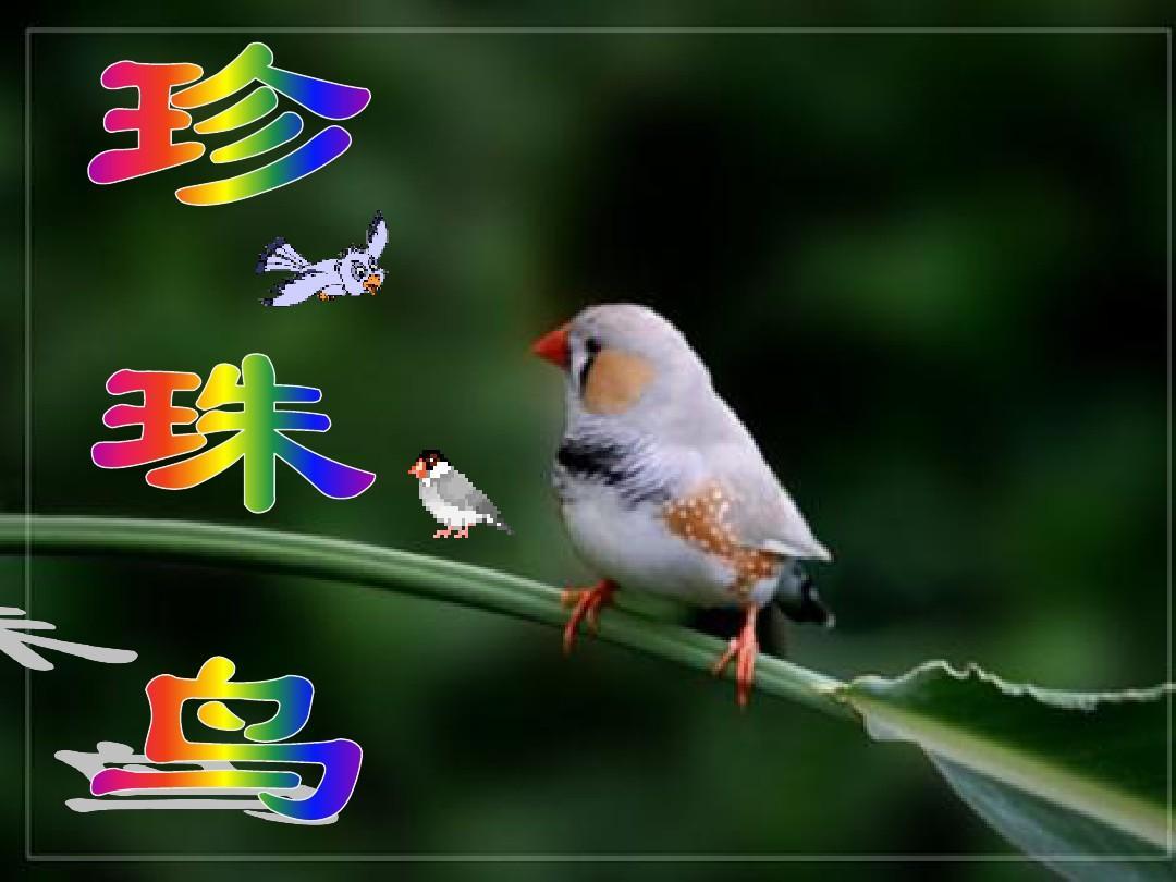 语文S版小学下册五年级语文《珍珠鸟》ppt课英语说课ppt一等奖图片