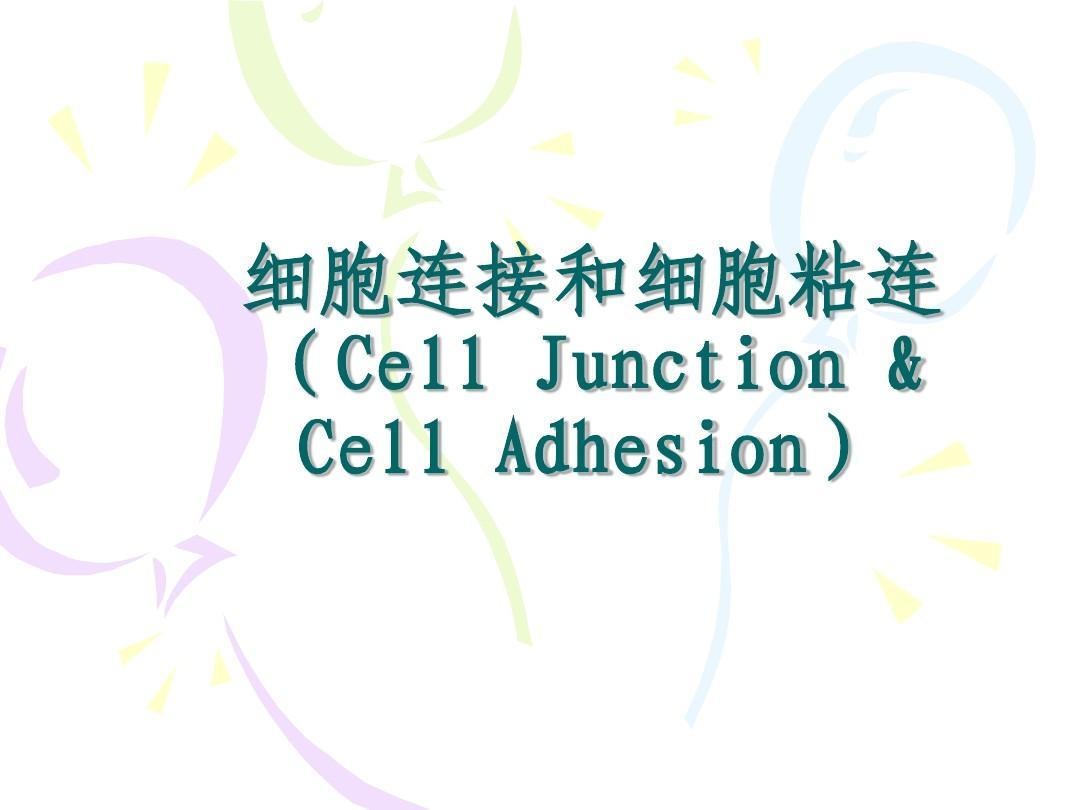 细胞连接介绍