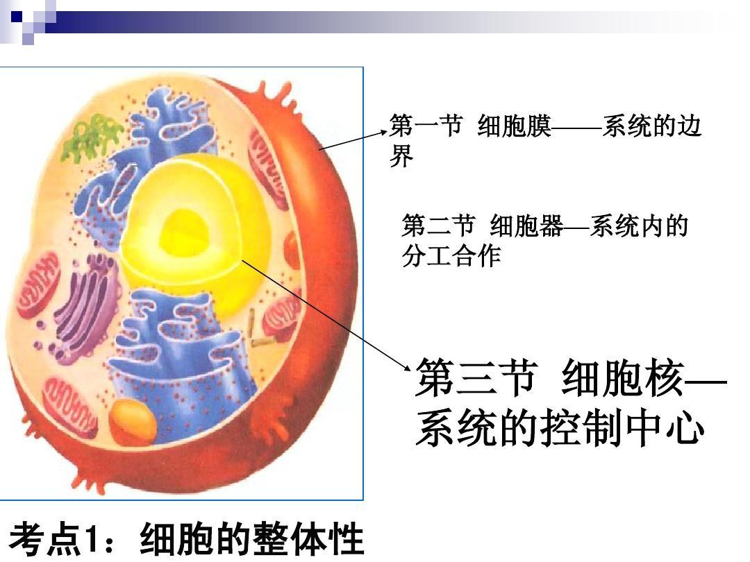 人教版必修1第三章第3节系统的控制中心细胞核(共36张PPT)