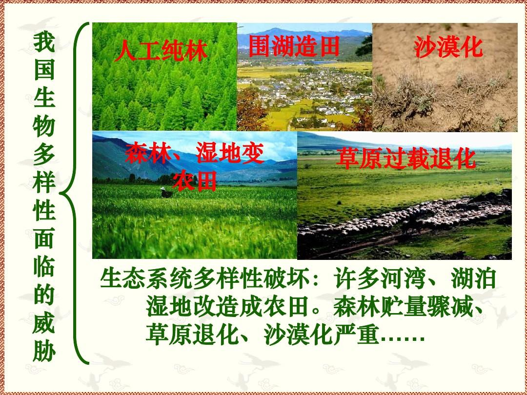 《保护生物多样性》课件1(14张ppt)(苏科版八年级下)图片