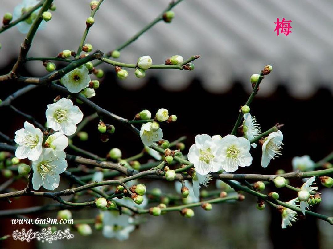 生物:花的结构和类型课件(济南版八年级下)(1)