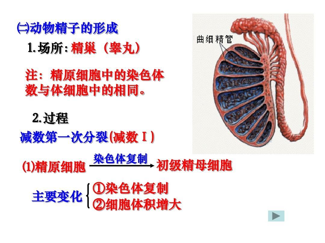 细胞形成和有性生殖减数的分裂ppt机械cad教学大纲图片