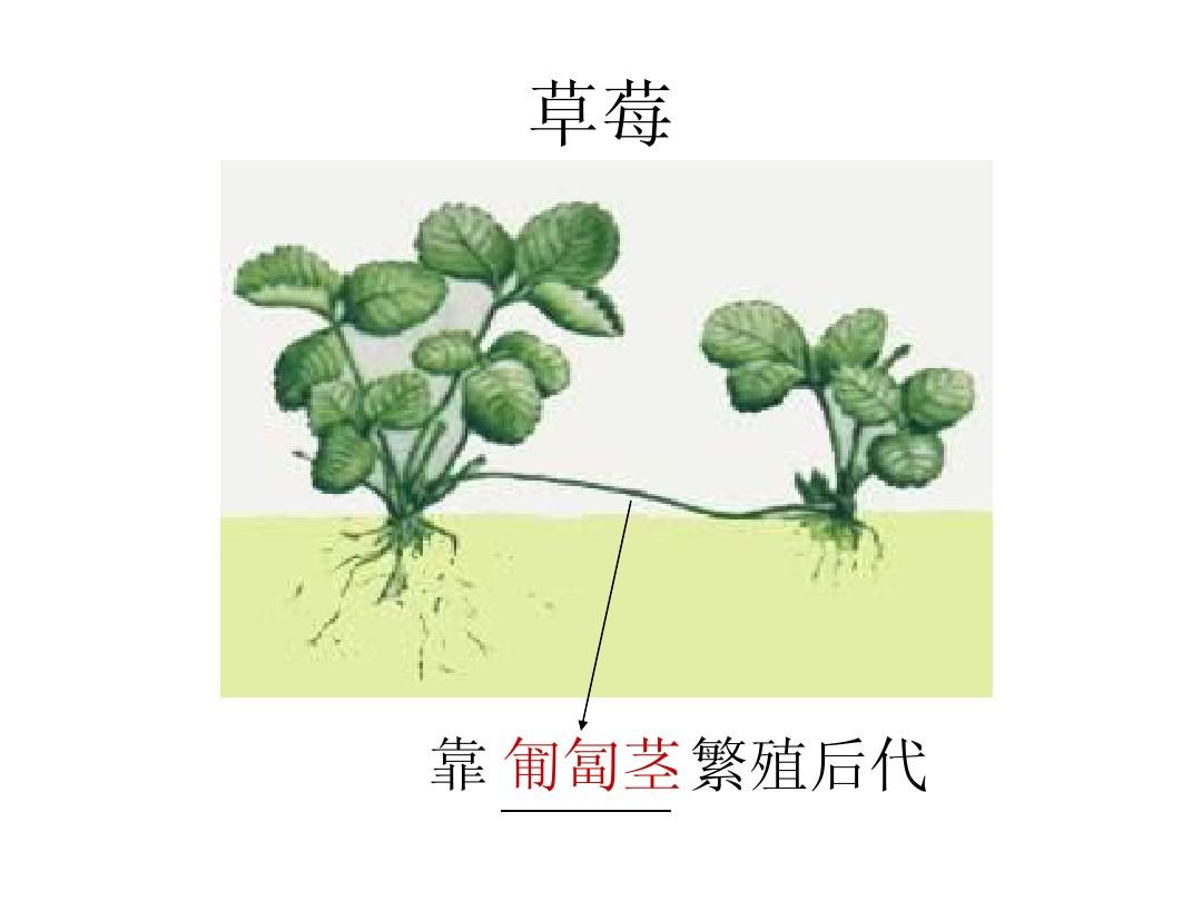 營養初中教師的課件繁殖初中ppt李小蓮沙集生物植物圖片