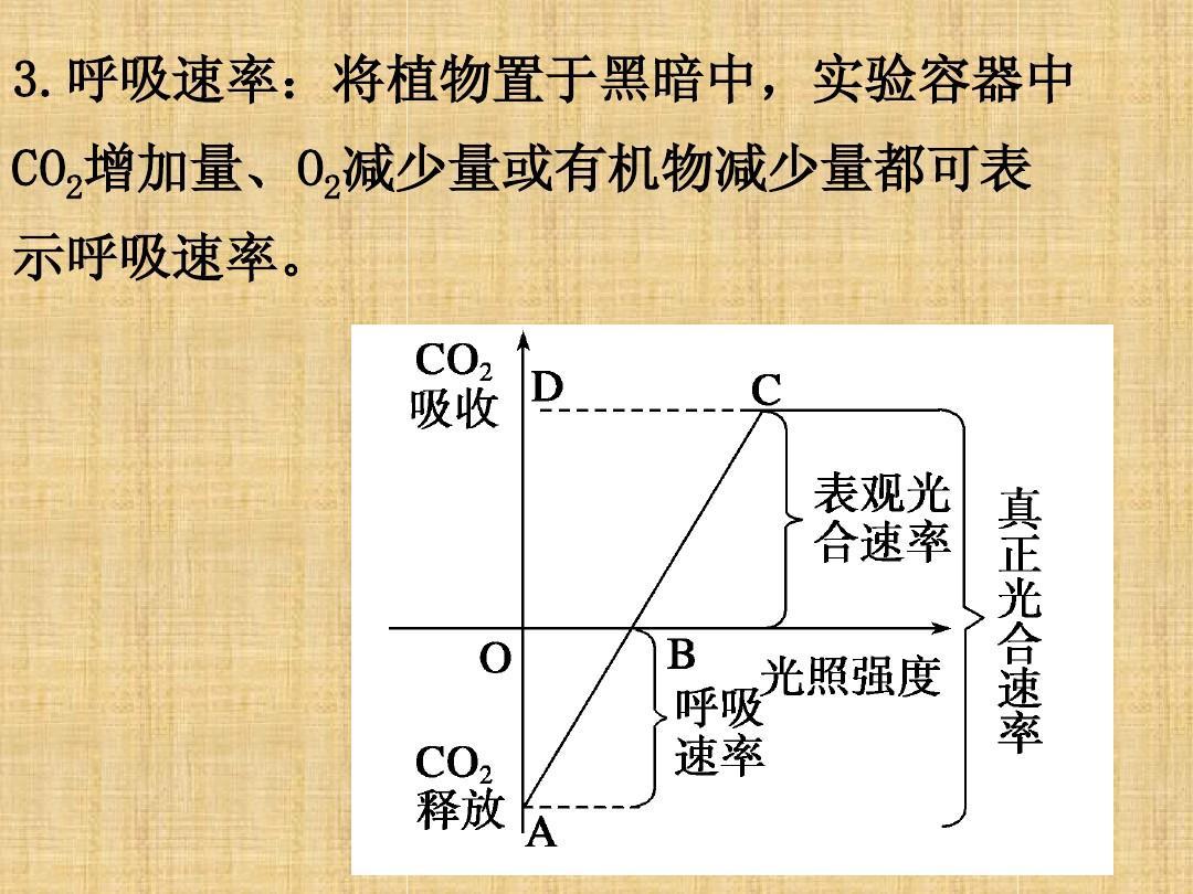 江苏省邳州市第二中学生物高中一轮总v生物光合作用之上海cranbrook高中艾图片
