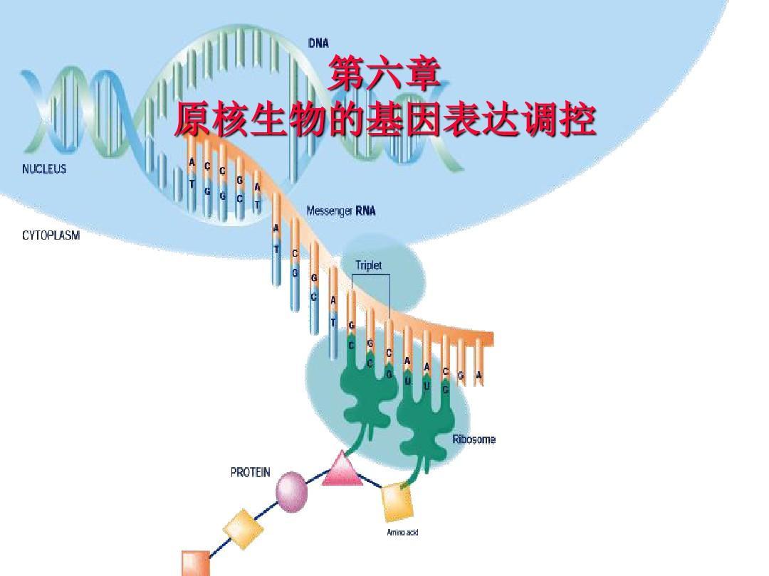 6原核生物基因表达的调控