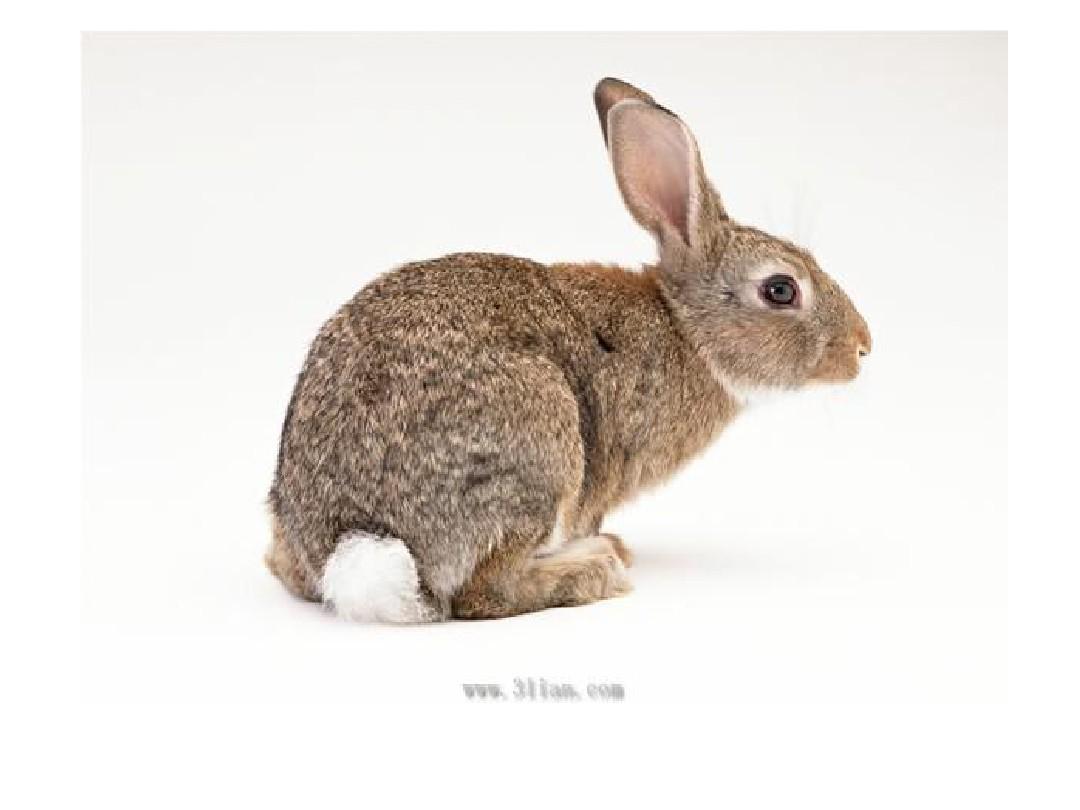长尾巴的兔子_类似兔子尾巴的小说-兔子尾巴 白泉颐-兔子尾巴小说作者-兔子 ...